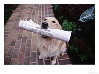 Dog with Newspaper Print available at Art.com
